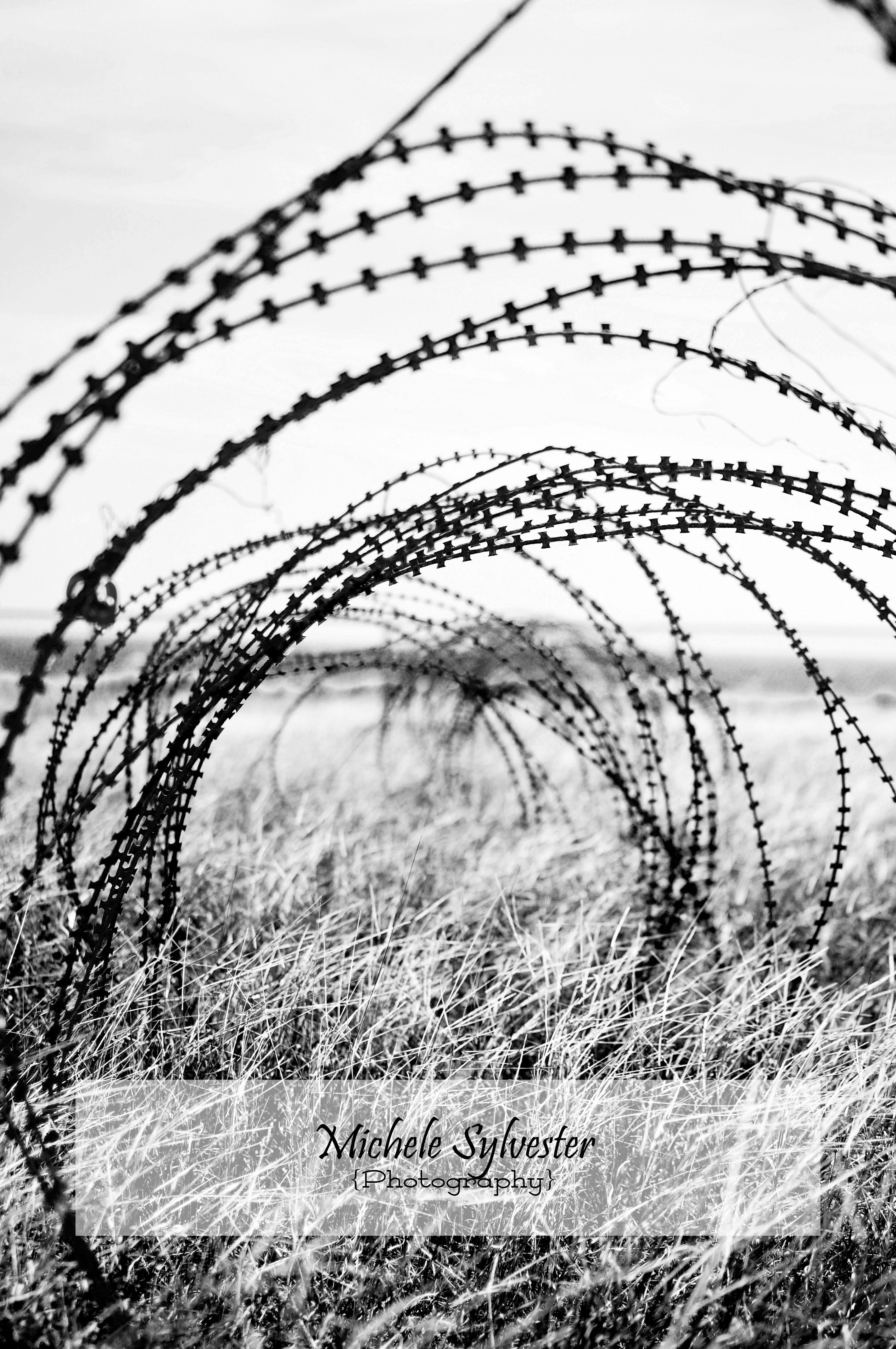 Constantine Wire © Michele Sylvester Photography | Photography ...