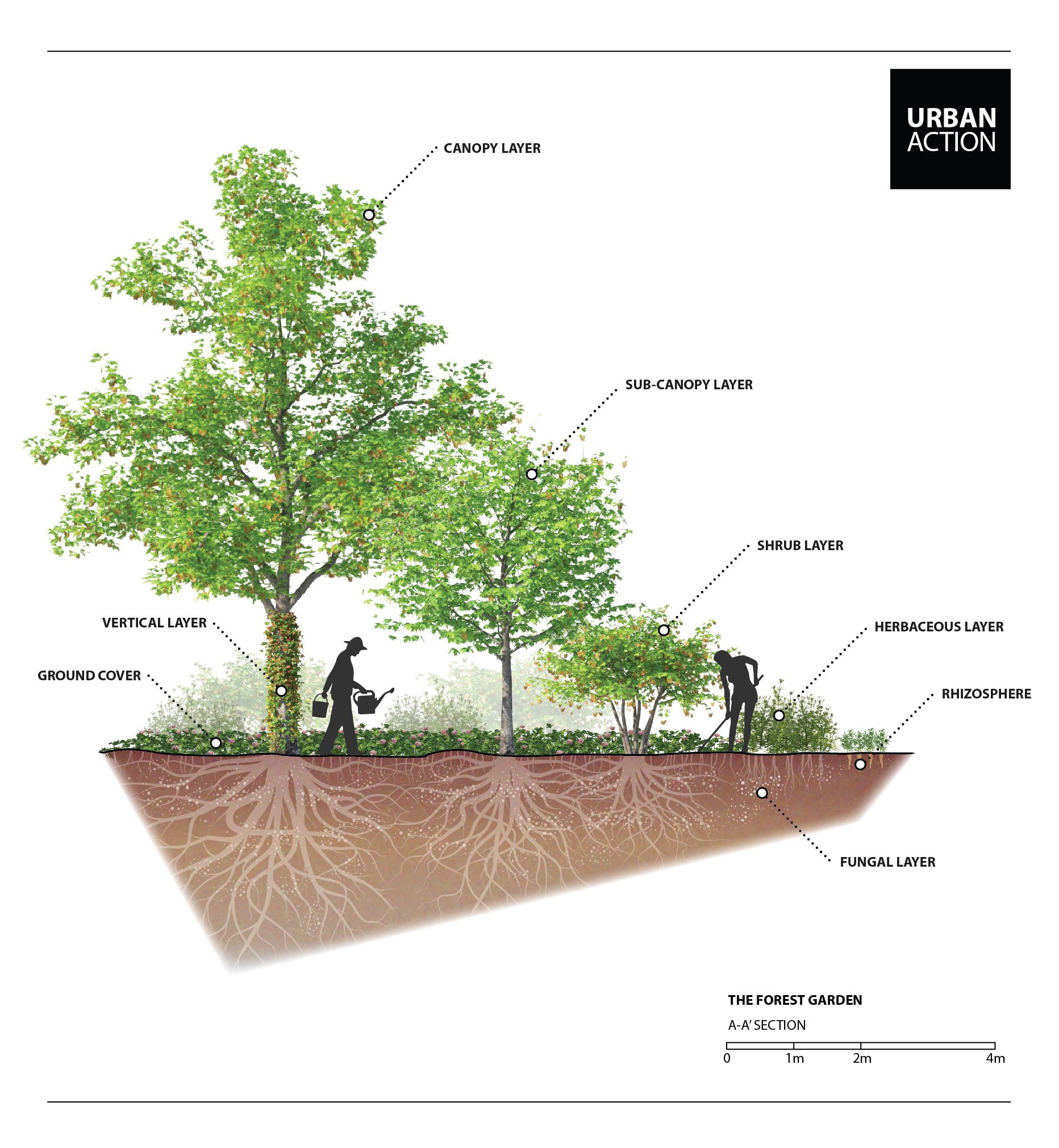 Permaculture Forest Garden Design By Urban Action