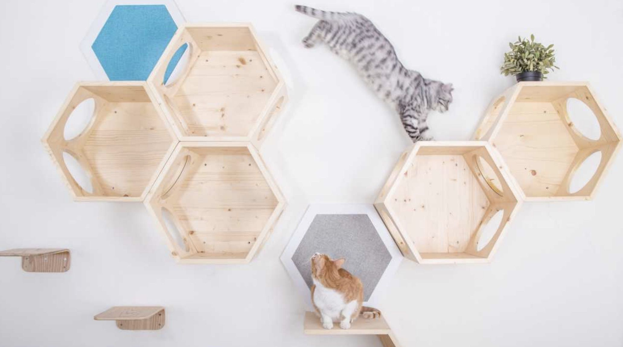 991addd7cfa5 Go Vertical with Cat Wall Shelf Systems - CatsPlay Superstore | Cats ...