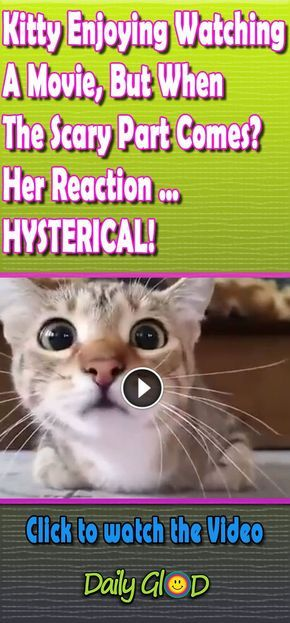 This Kitten Is Quite A Movie Buff But She Hates Scary Scenes This Is Hilarious Animal Bestvideo C Funny Cat Pictures Funny Animal Pictures Funny Cat Videos