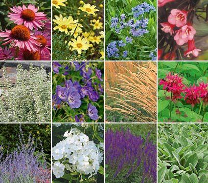 Deer Resistant Garden For Sun Deer Resistant Perennials Deer Resistant Garden Deer Resistant Flowers