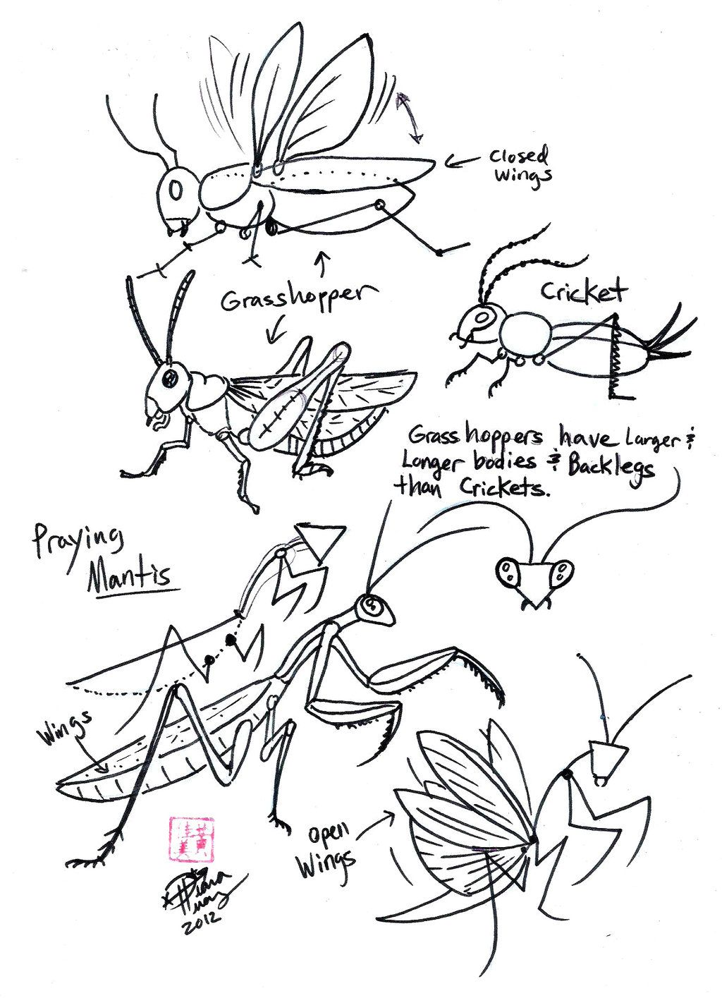 Draw Grasshopper Cricket And Praying Mantis By Diana