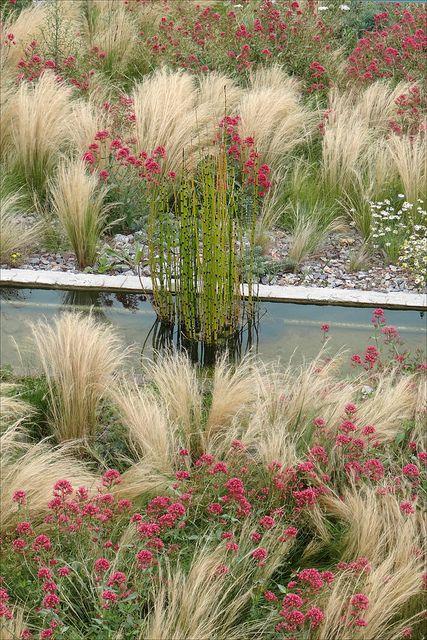 le jardin des orpins et des gramin es estuaire st nazaire en 2018 plants pinterest. Black Bedroom Furniture Sets. Home Design Ideas