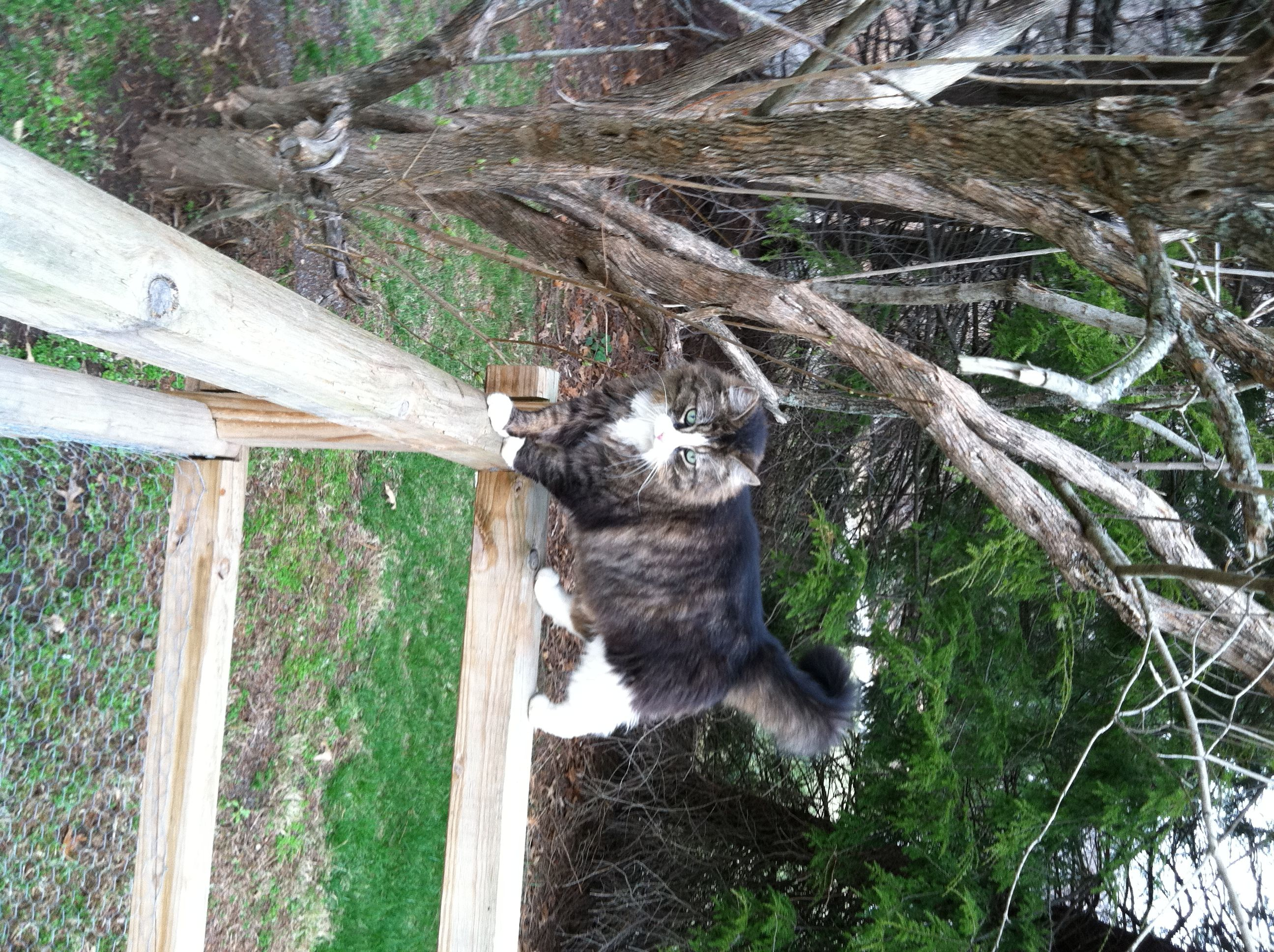 Toonces went missing around 530 a.m. on Friday September