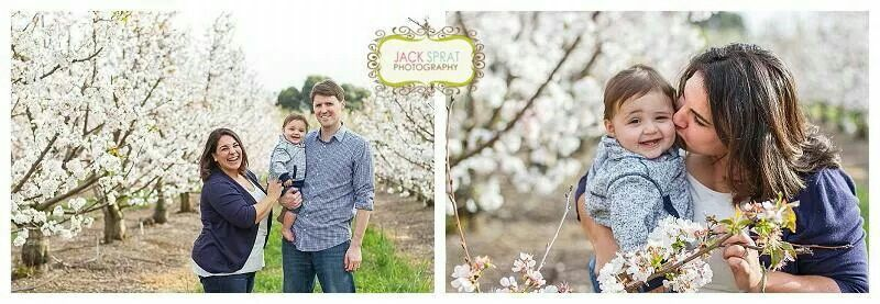 Cherry orchards, spring family photography