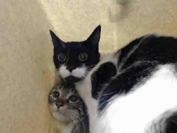 Check out A4755836's profile on AllPaws.com and help her get adopted! A4755836 is an adorable Cat that needs a new home. Los Angeles County Animal Control - Downey CA