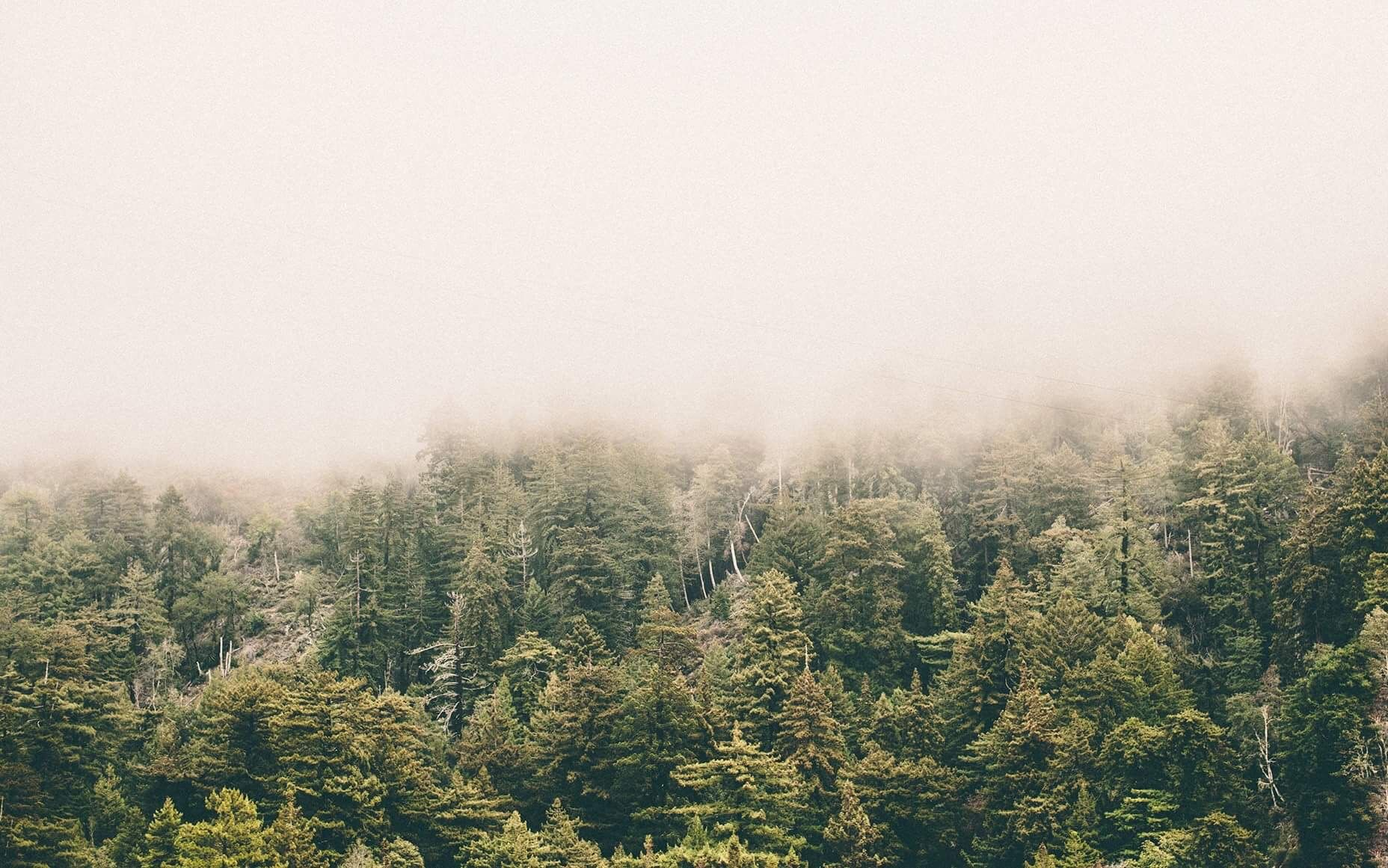 Pin by Laurence Deschênes on Wallpaper Foggy forest
