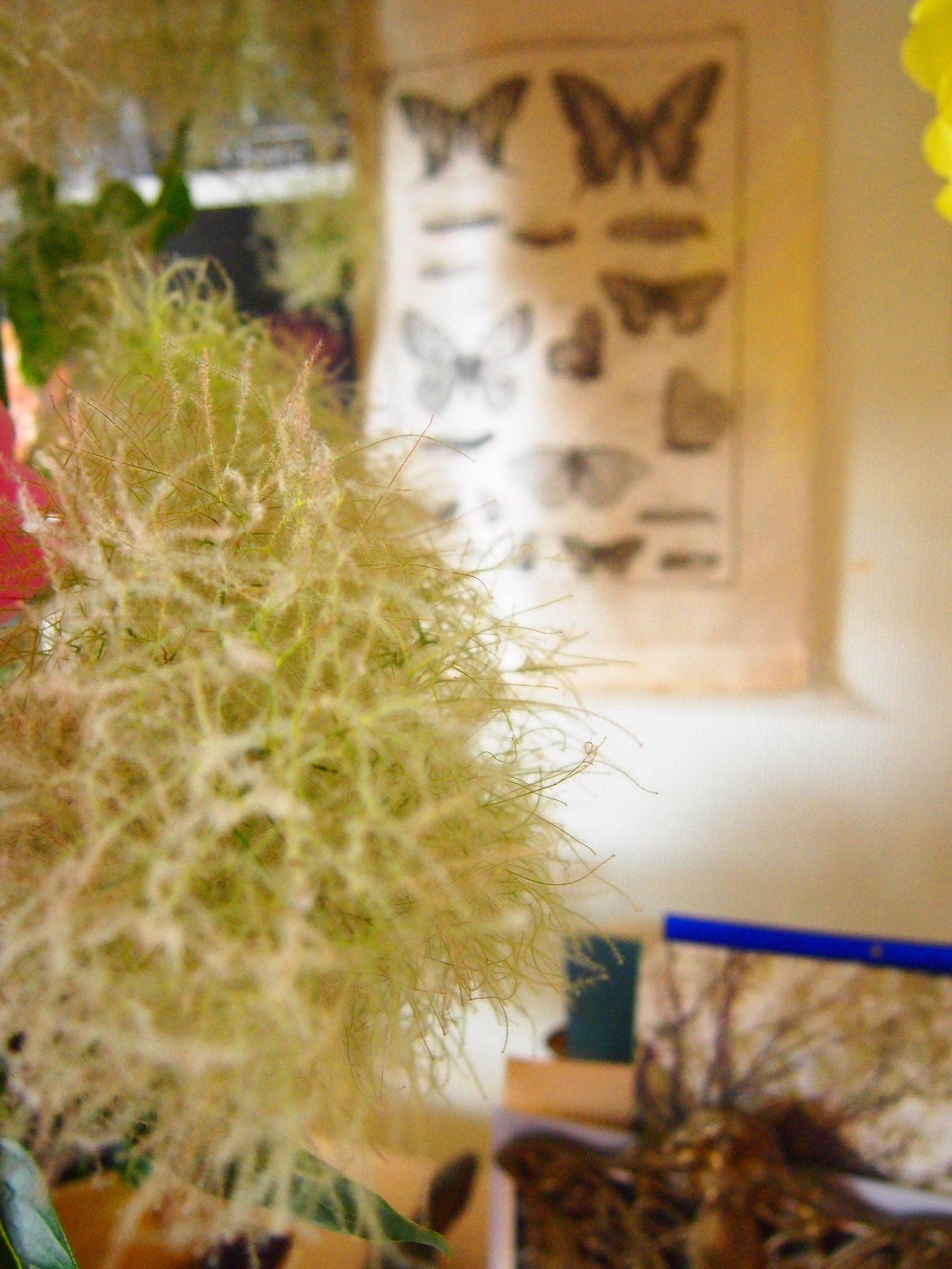 https://flic.kr/p/eMqrqH | papillon,smoked tree | OLYMPUS DIGITAL CAMERA