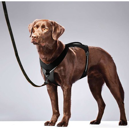Pets Dog Harness Dogs Dog Activities