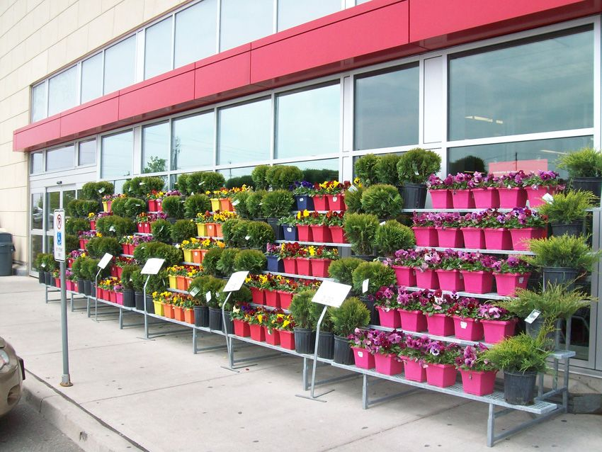 Retail floral display retail displays sprouts floral for Idea center dilshad garden