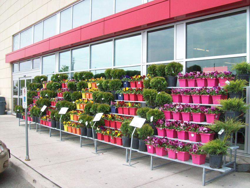 Garden Centre: Retail+floral+display