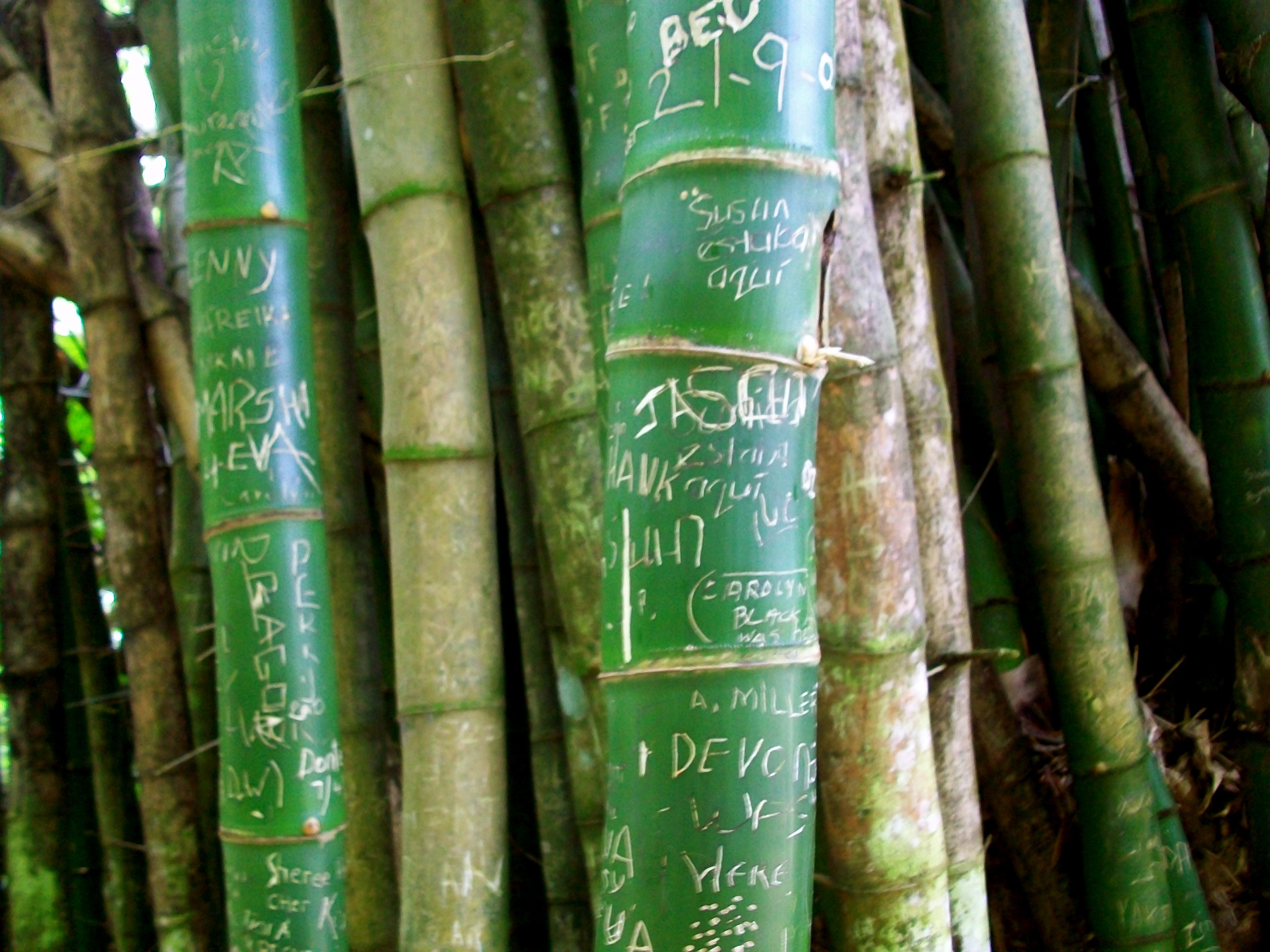 Bamboo carvings my photography pinterest