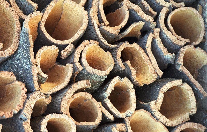 Cork. Oak, showing the dark reddish bark shortly after harvesting ,