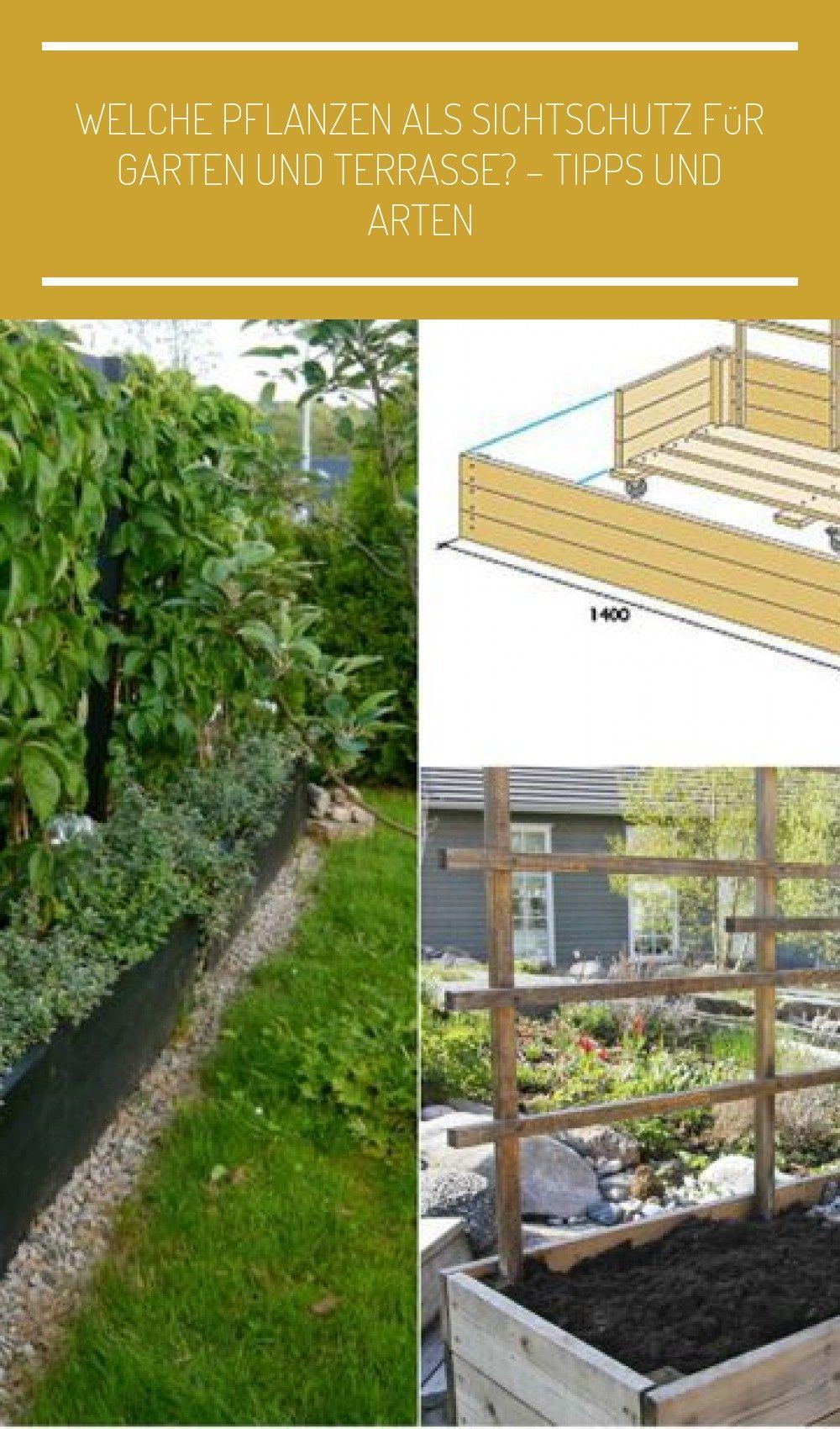 Welche Pflanzen Als Sichtschutz Fur Garten Und Terrasse Tipps