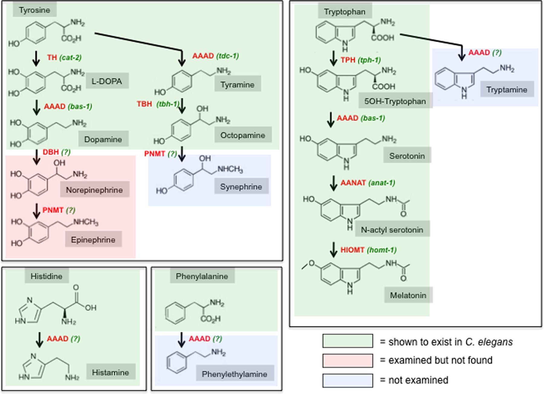 Acetylcholine Choline Dopamine Norepinephrine Epinephrine