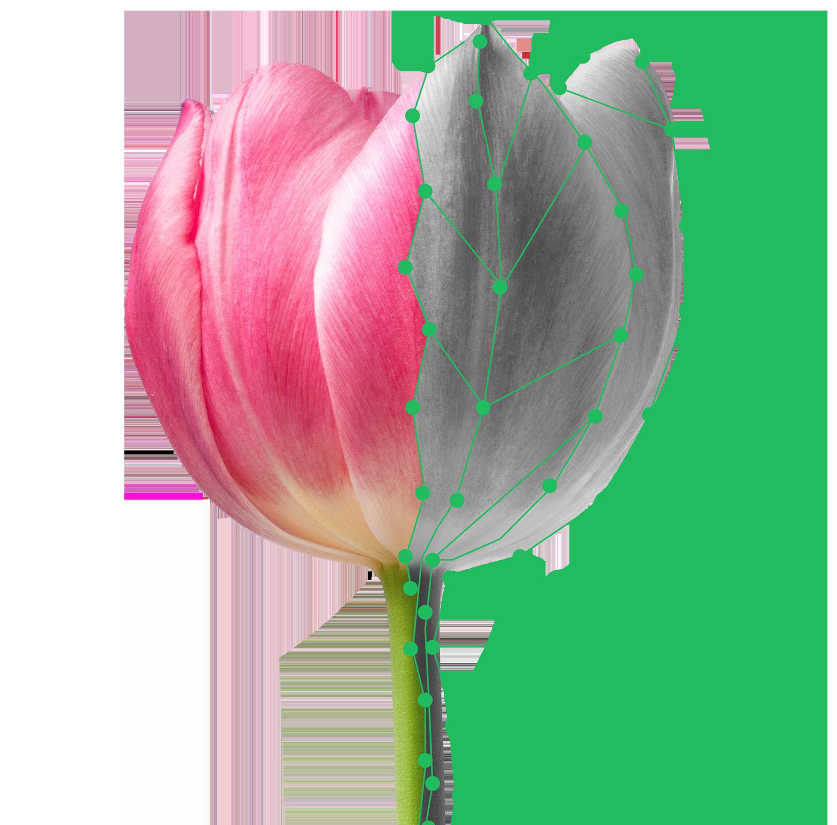 PlantSnap Plant Identification Identify Flowers, Trees