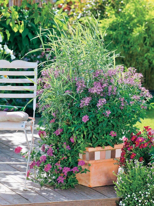 Composizione Vasi Da Balcone balcone e terrazzo: le erbe ornamentali da coltivare in vaso