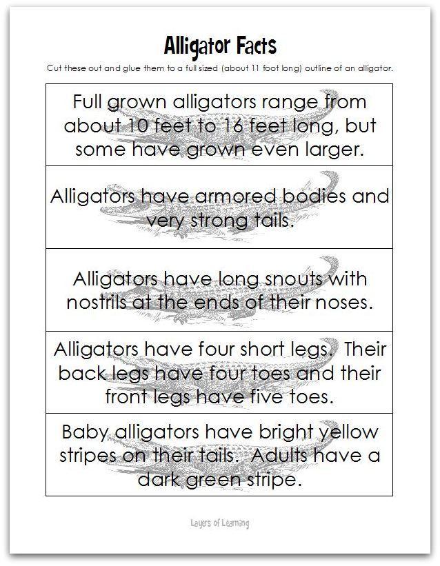 Clothespin Alligator Craft | Alligator crafts, Alligators and Outlines