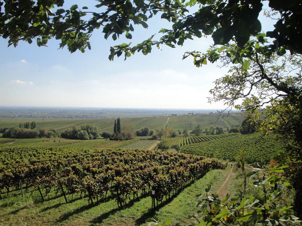 Palms To Vines Wine Tour