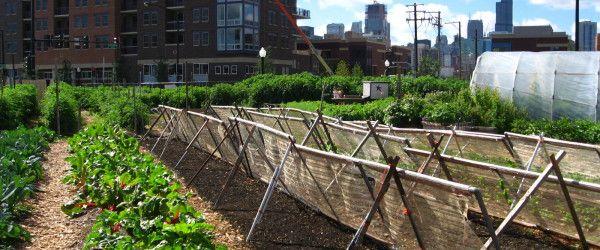 Trends in Urban Farming