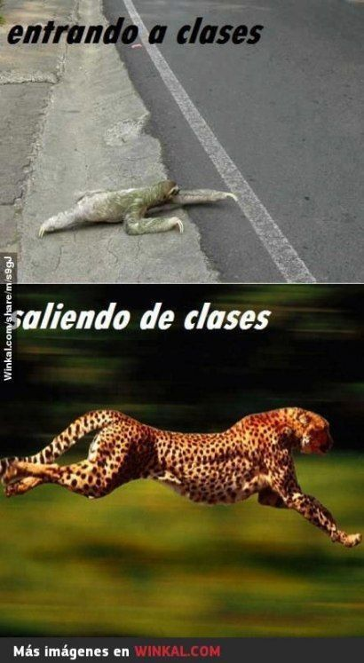 New memes in spanish funny animals Concepts – #ANIMALES #chistosos #de