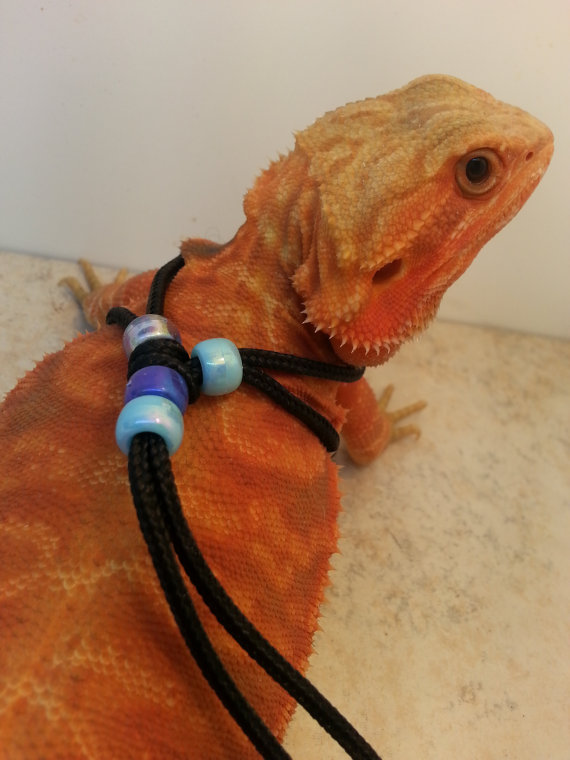 REPTILE HARNESS ADJUSTABLE (one-size-fits-all) Blue | lizard ...