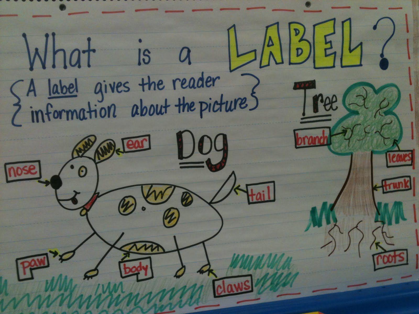 writing workshop kindergarten anchor charts kreative in kinder writer s workshop labeling  [ 1600 x 1200 Pixel ]