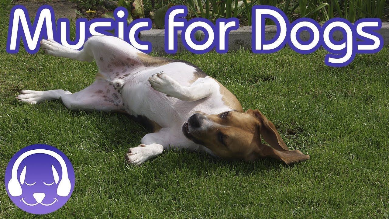 Deep Relaxation Music for Dogs Classical Music to Soothe