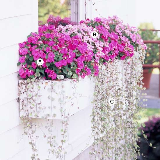 Flower boxes for shade