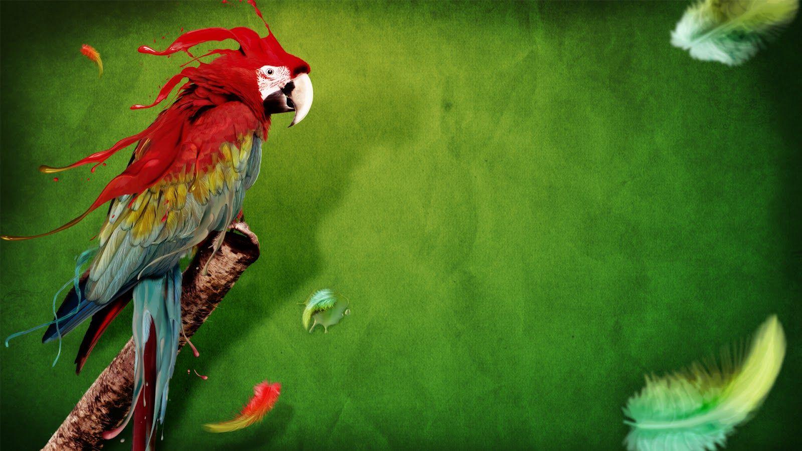 Parrot Colors Abstract Digital Art HD Wallpapers Free Desktop