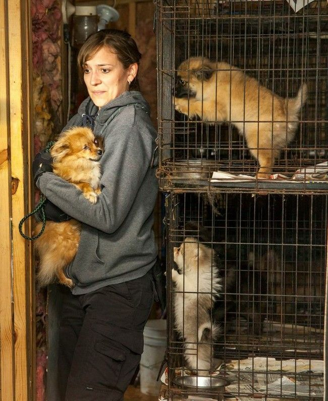 Photos Show What The Life Of A Puppy Mill Dog Is Really