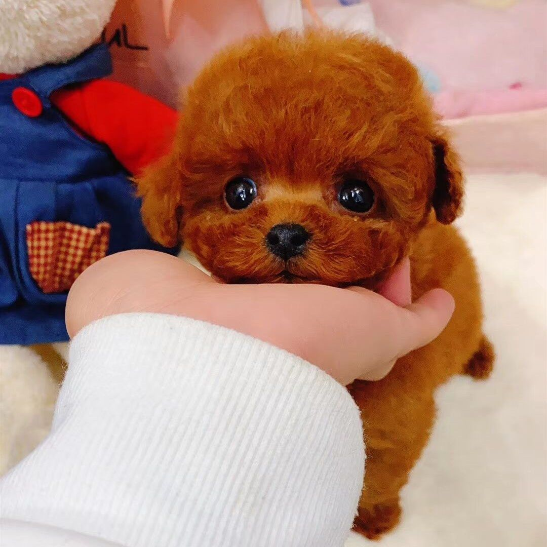 Realistic Teddy Dog Lucky Toyfun Teddy Dog Plush Stuffed Animals Dog Toys [ 1080 x 1080 Pixel ]