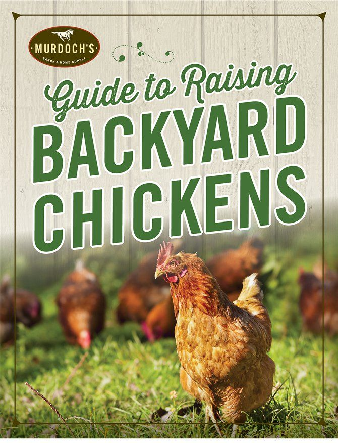 Thinking about starting a backyard flock of your own ...