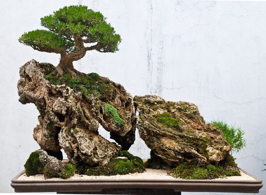Bonsai landscape saikei and penjing landscapes and for Japanese trees for landscaping