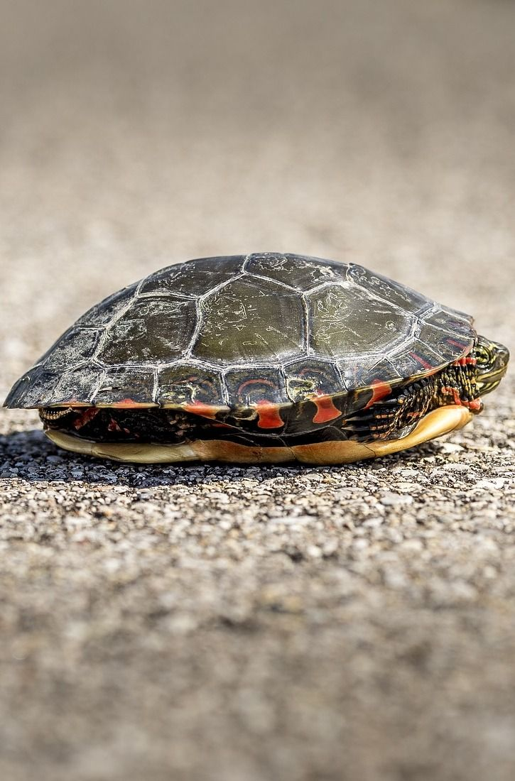 how to care for a turtle shell