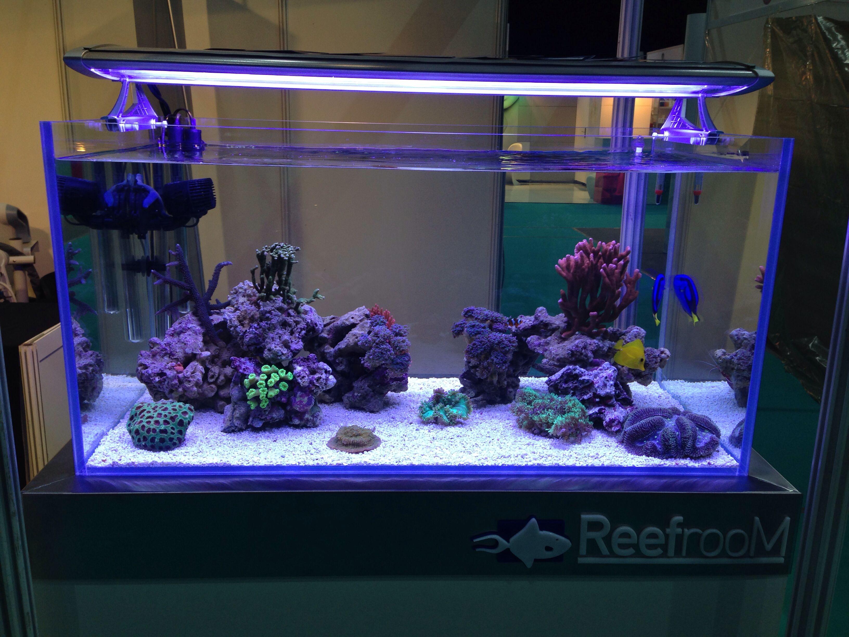 8c8a0dc05f634c1214c3092fc2fe2106 Frais De Aquarium Recifal Complet Concept