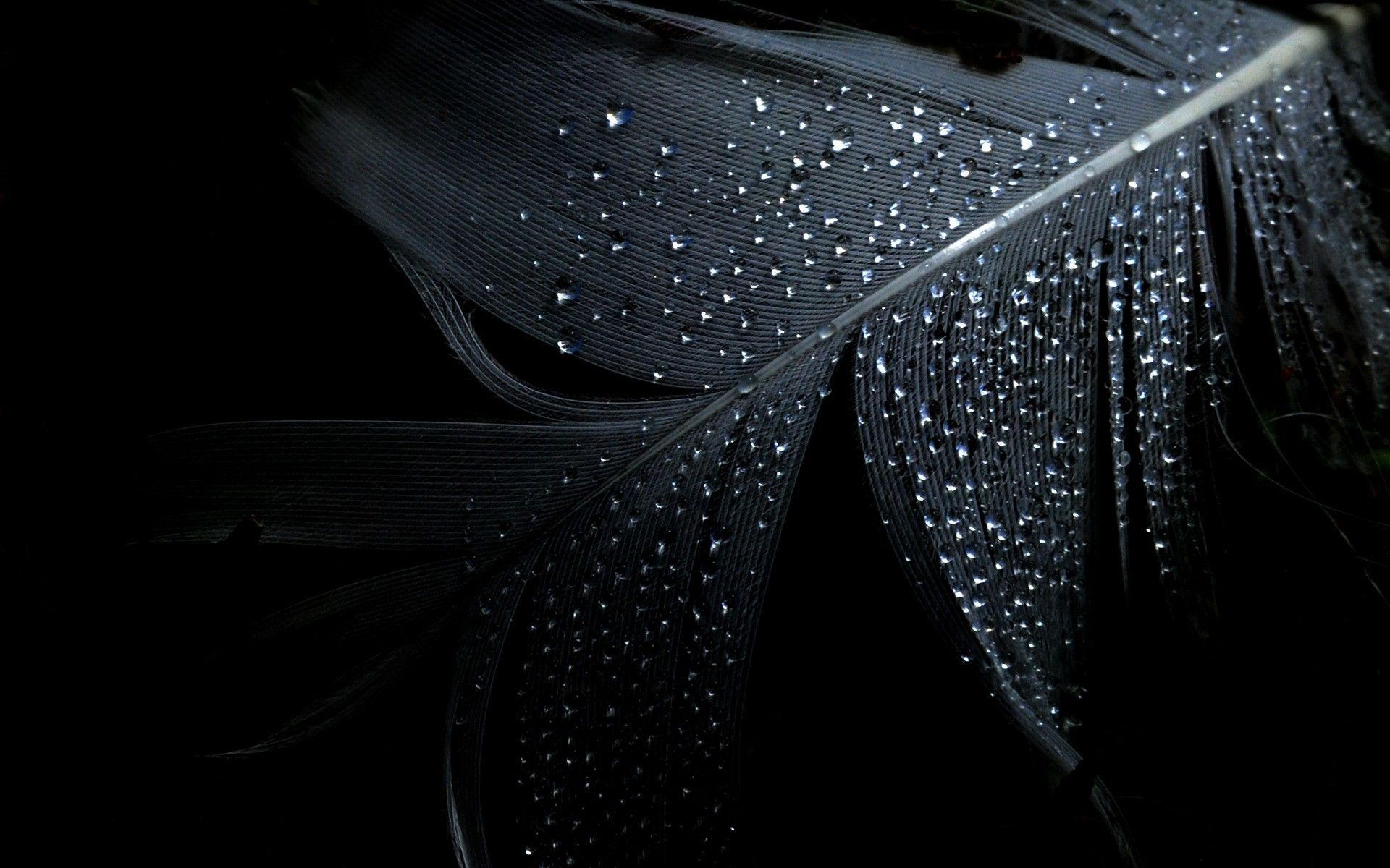 Black Dark Leaf Wallpaper Httpwww 0wallpapers Com2879 Black