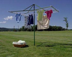 clothes line tree