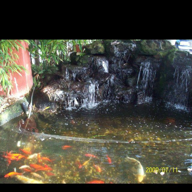 Koi and goldfish fish pond - Sanibel Island, FL | Scenic