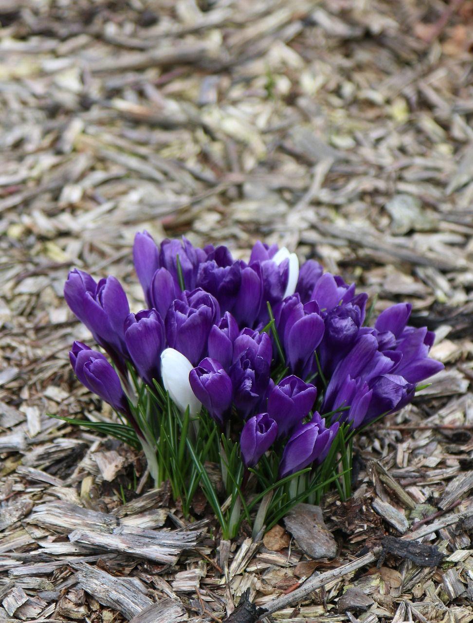 Pierwsze Oznaki Wiosny National Parks Kakadu National Park Flowers