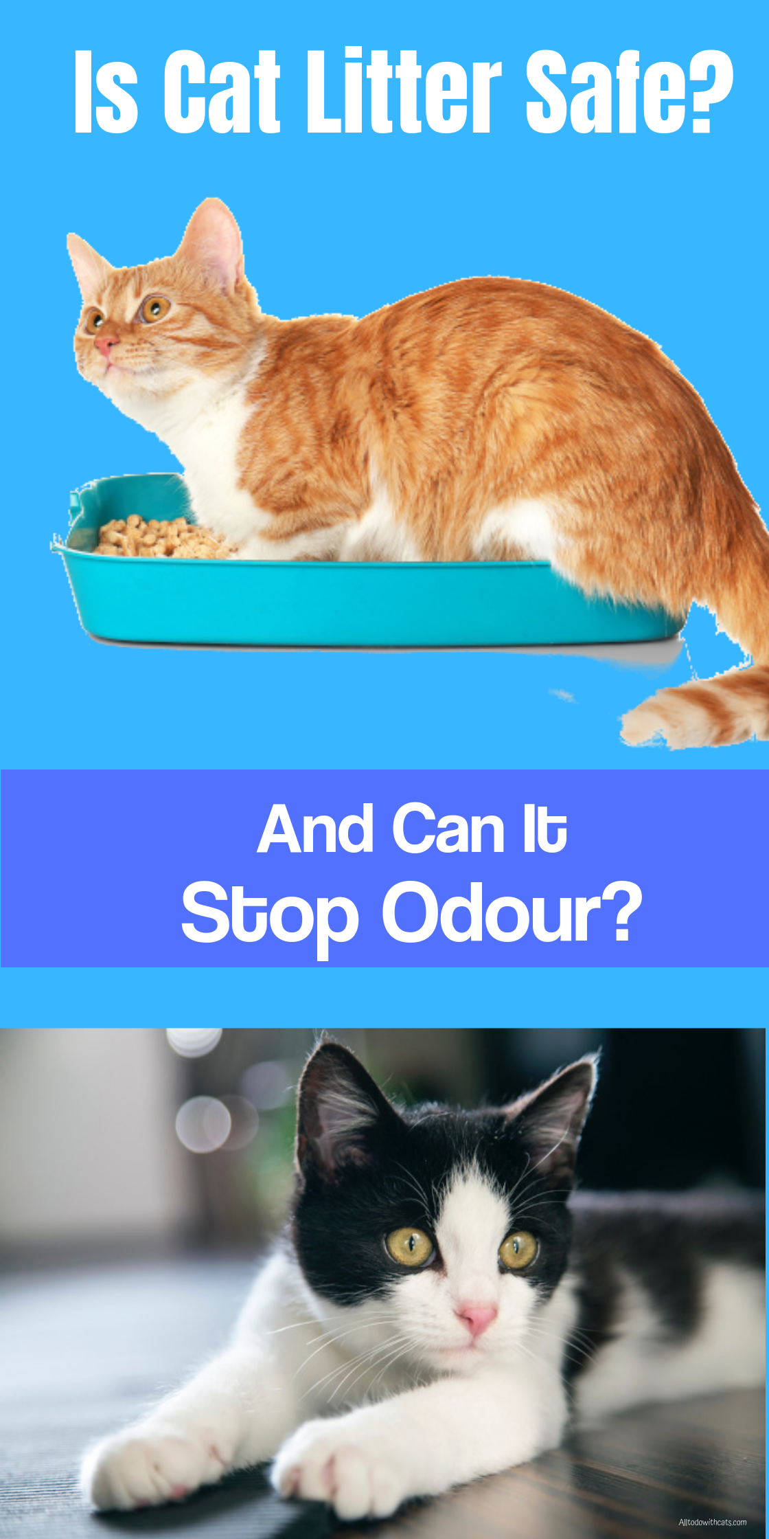 Is Clumping Cat Litter Safe And Does It Stop Odour All To Do With Cats Clumping Cat Litter Best Clumping Cat Litter Cat Litter