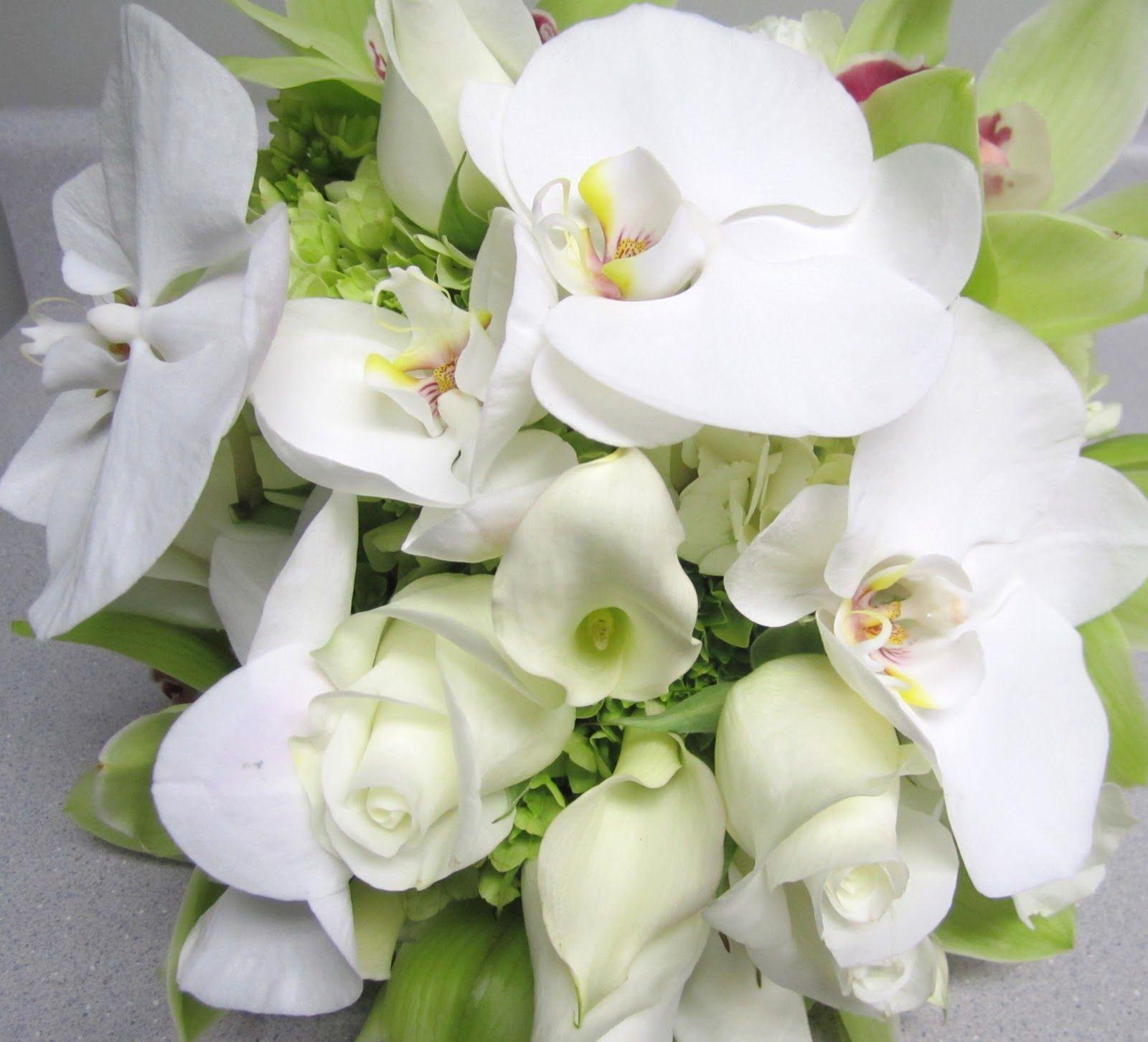 hd wallpapers green and white phaelanopsis - Google zoeken