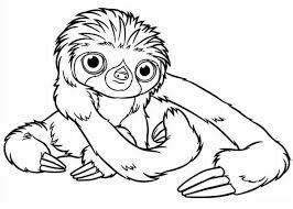 Sloth Coloring Pic Cute Coloring Pages Super Coloring Pages Bear Coloring Pages