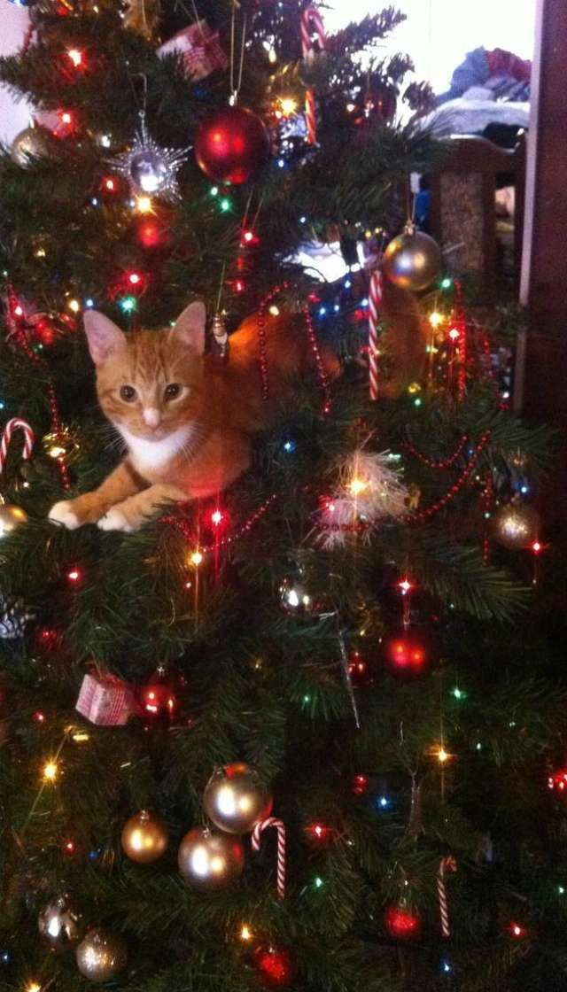 No tree is complete without a little cat hiding in or on it!