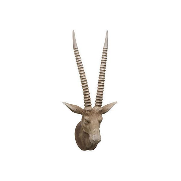 Antelope head wall decor natural antlers horns taxidermy  also rh pinterest
