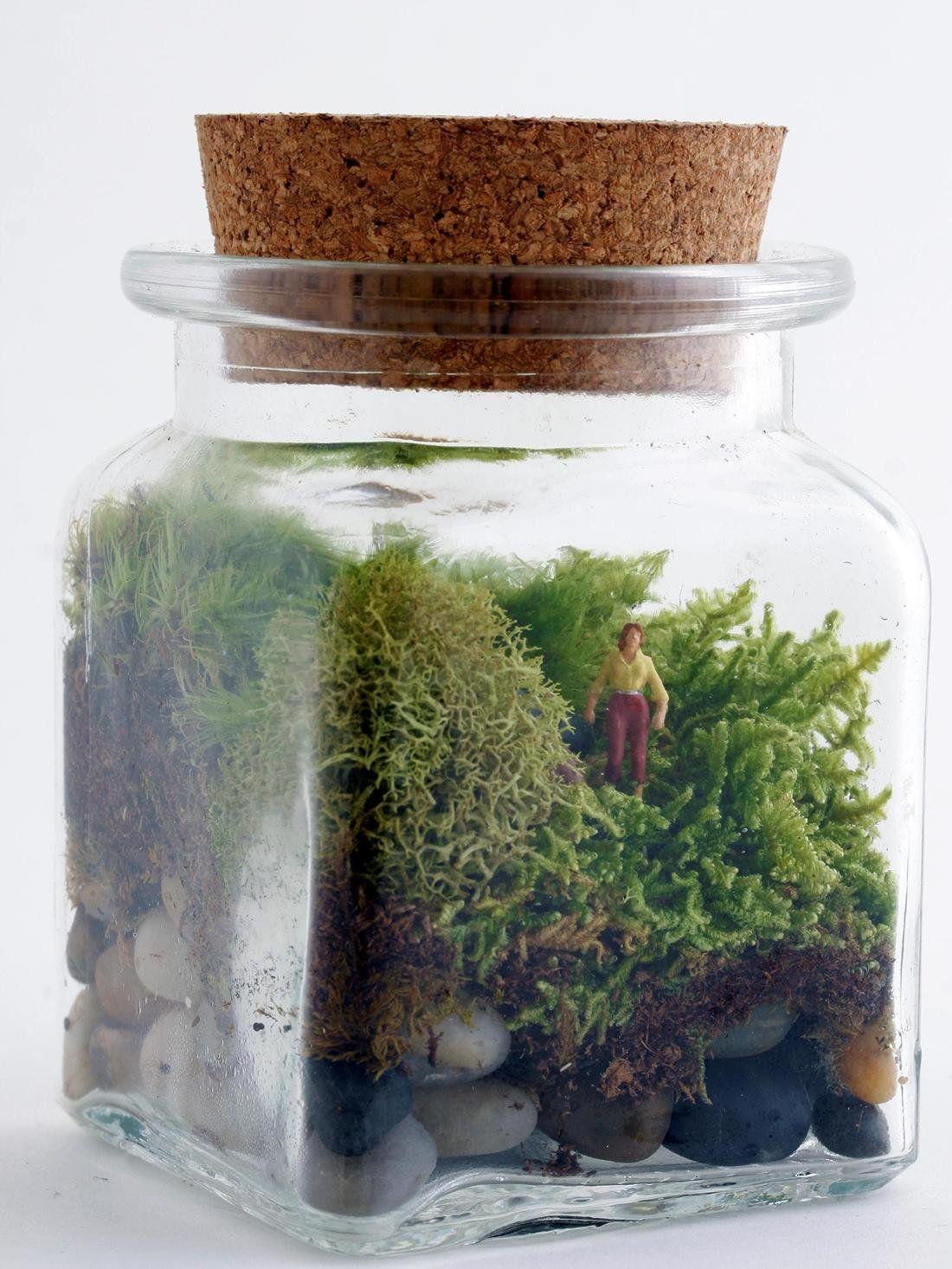 Twig Terrariums Le Petit Singularite DIY kit Female