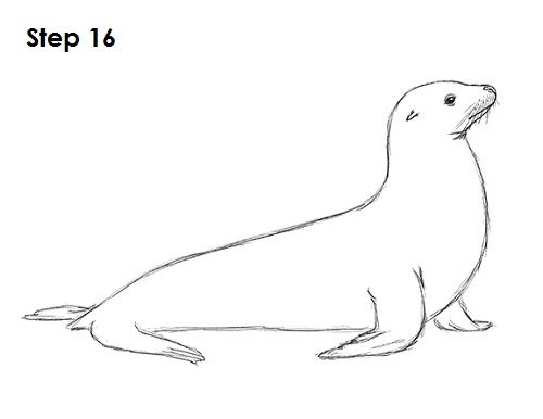 Seal Drawing 16 | Animal Silhouettes, Vectors, Clipart, Svg ...