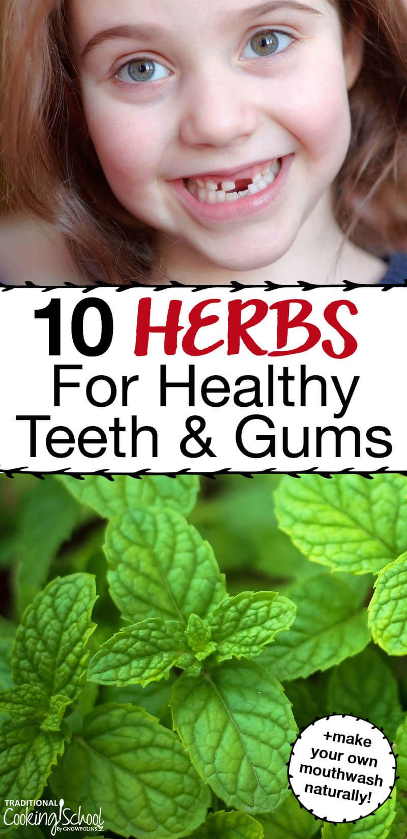 10 herbs for healthy teeth gums make your own natural