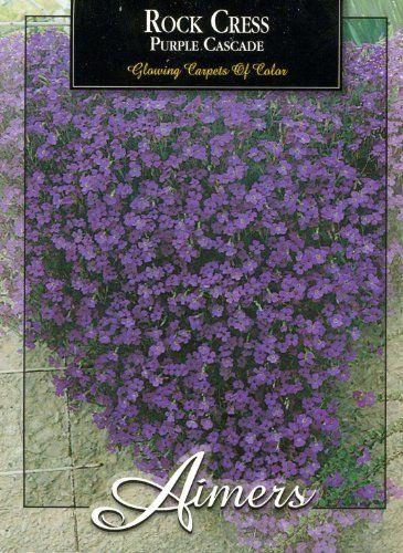 http://tcsmithinn.com/aimers-3262-rockcress-purple-cascade-seed-packet-p-141.html?zenid=ffda18830ea586cb905bccd738ee9884