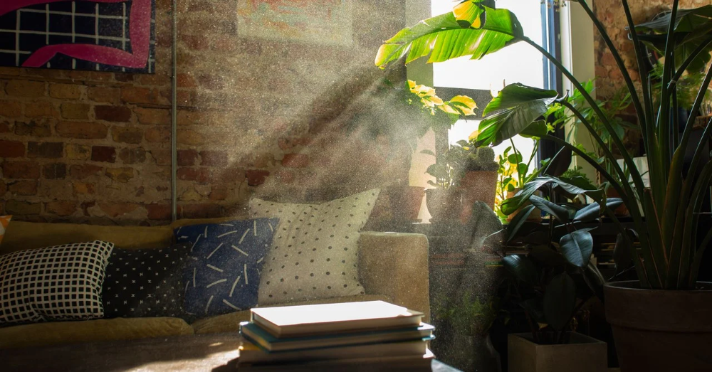 Room to Breathe My Quest to Clean Up My Home's Filthy Air